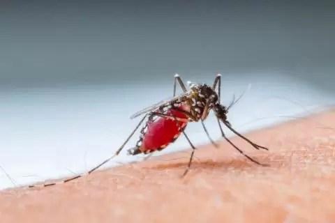 mosquito anopheles dd892e735ab224e312c1f1a38d644c132ebd6dd3