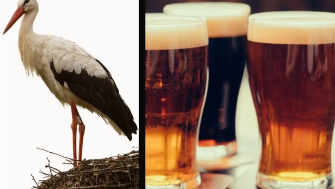 Un nido de cigüeñas impide la producción de cerveza en Alemania