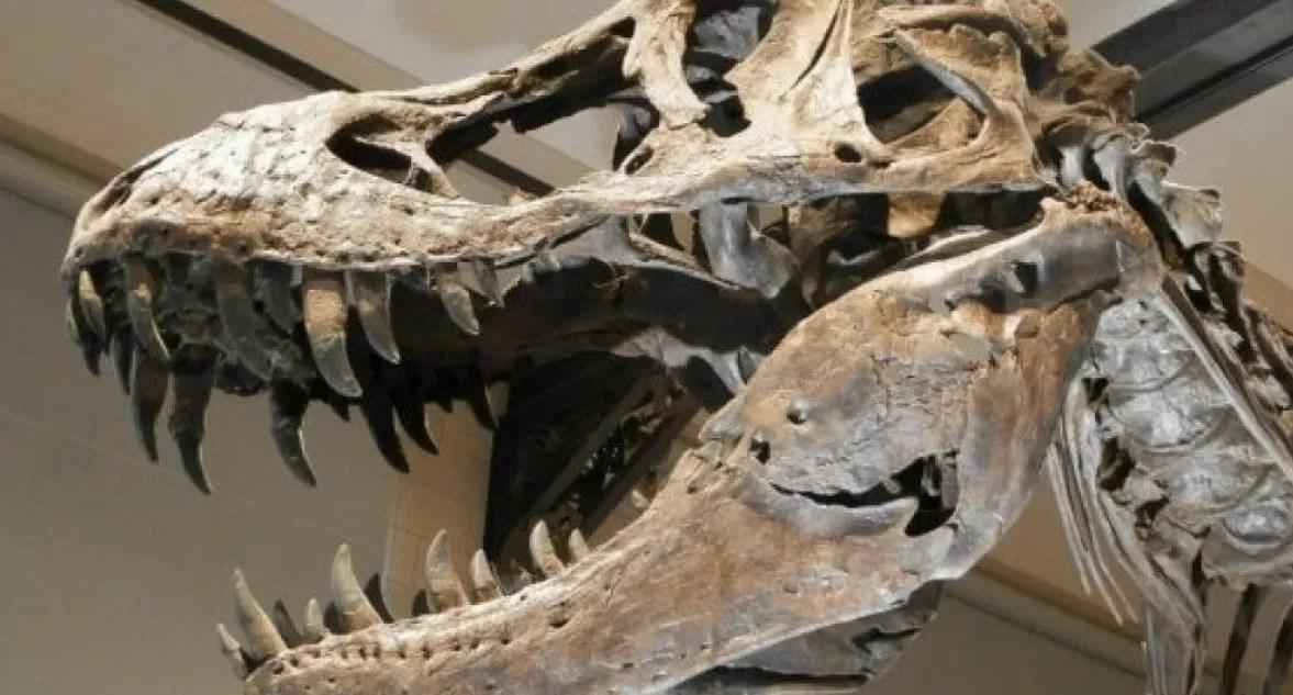 Un hombre muere atrapado dentro de una reproducción de un dinosaurio en España