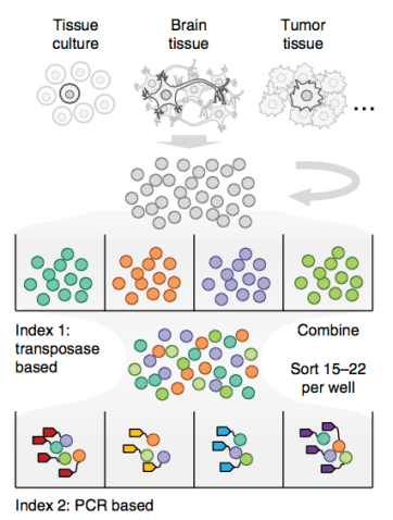 Single-cell copy number combinatorial indexing workflow.