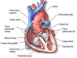 Puasa baik untuk eksehatan jantung