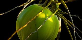 manfaat air kelapa hijau untuk pengobatan