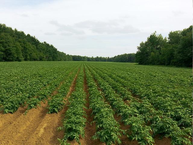 Mengenal sistem pertanian organik