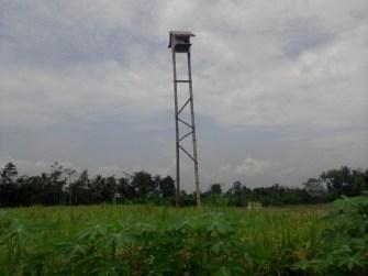 Rumah/sarang burung hantu yang dibuat oleh petani di Kabupaten Banyumas.