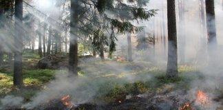 Sosiologi Lingkungan: Cabang Sosiologi yang Sangat Penting