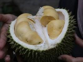 mabuk durian