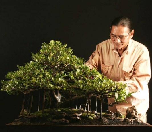 filosofi bonsai