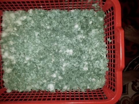 jamur trichoderma