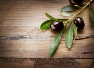 benefits olive leaf extract
