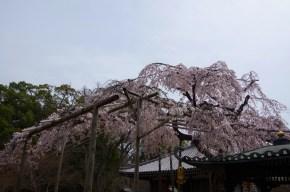 In Tozenji Temple