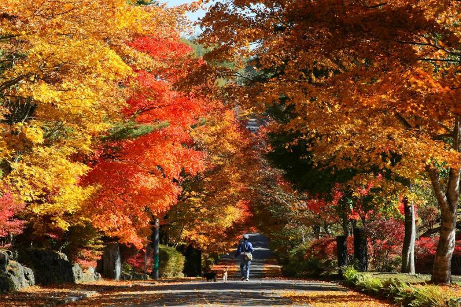 軽井沢の紅葉の2017の見頃の時期はいつ?混雑情報や見所スポットも