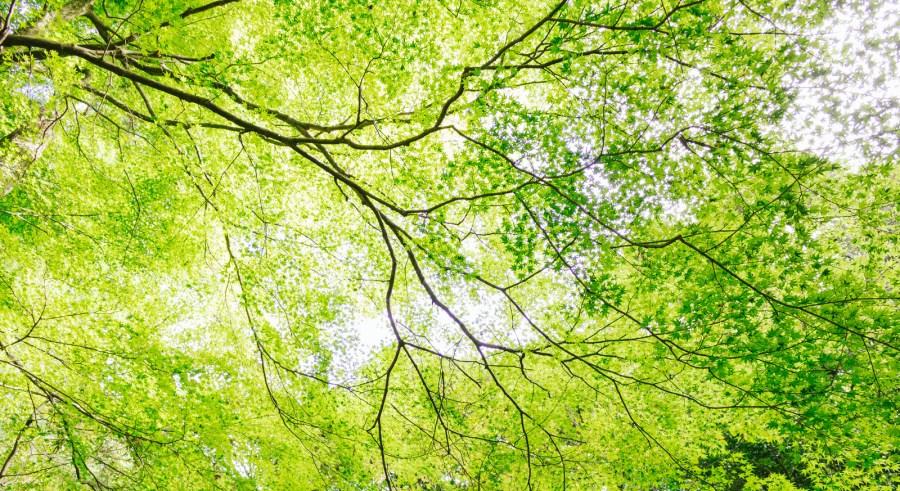 新緑の候の読み方や意味!時期はいつ・いつまで、使い方や例文も