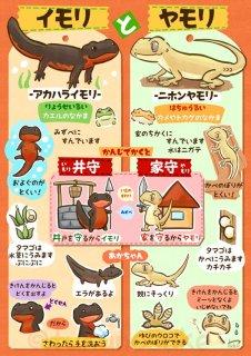 ヤモリとイモリの違いは?特徴・生態や見分け方、トカゲとも違う?