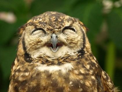 フクロウの鳴き声の意味や種類は?うるさい時の対策や生態も
