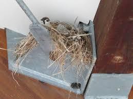 スズメの巣作り!場所や季節、縁起が良いか、対策・予防・駆除の方法も