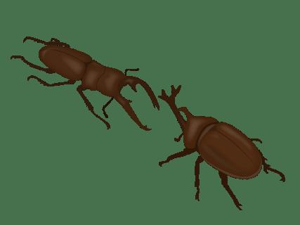 カブトムシとクワガタムシはどっちが強い?違いや人気のある方、生態も