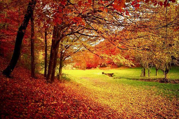 紅葉の候の意味や読み方は?時期はいつ・いつまで使える、例文や結びも