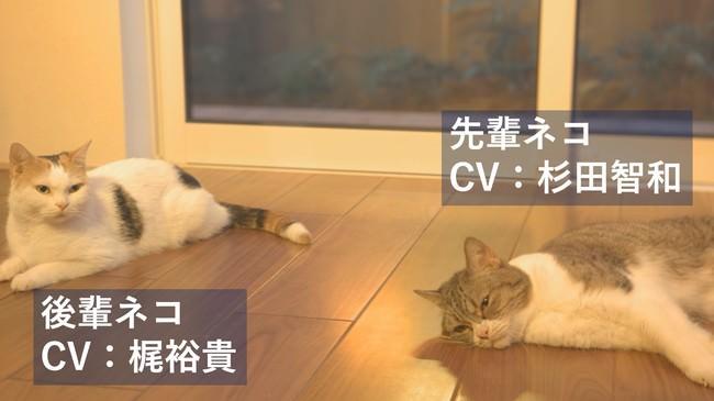 """人気声優""""杉田智和""""と""""梶裕貴""""が、猫にアテレコ「#アテネコ動画」で共演!"""