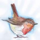 robin-like-a-wren