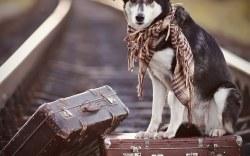 Por qué es mejor adoptar a un perro