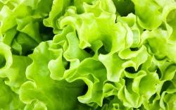 vegetales verdes contra el estrés
