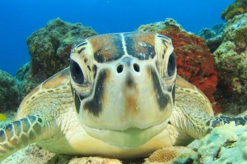 taller de tortugas marinas en cozumel