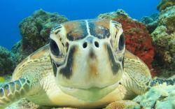 temporada de anidación de tortugas