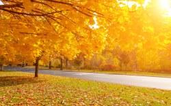 Vacaciones de otoño en Filadelfia