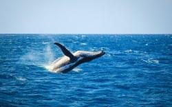temporada de ballenas en los cabos