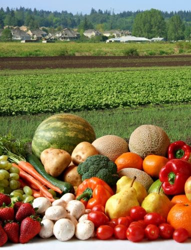 Grand Solmar te invita a visitar el mercado orgánico en The Shoppes at Palmilla en Los Cabos