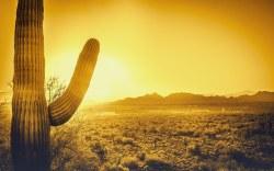 Estas vacaciones de Verano, explore la ciudad de Sedona, Arizona