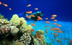 Top 5 de lugares para practicar buceo en Los Cabos