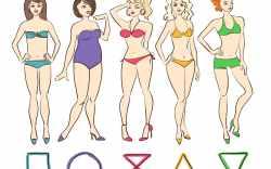 distribución de la grasa en el cuerpo
