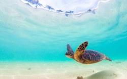 Explorers Travelers Club destaca a Hawaii como un excelente destino en cualquier época del año.