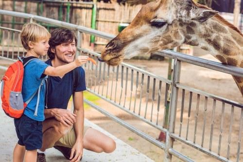 Tus Vacaciones en Línea te Invita a Viajar el Soleado Florida. Orlando. Miami zoo
