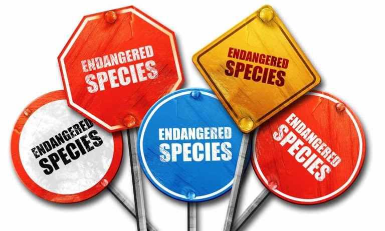 porque el marfil es tan valioso, la caza del marfil, trafico de marfil, caza de elefantes por marfil, caza furtiva, caza furtiva consecuencias, caza de elefantes, save the elephants, caza furtiva de elefantes