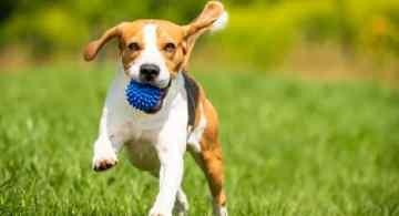 alimentos que un perro no debe consumir, que comida es mala para los perros, alimentos permitidos para perros, alimentos mortales para perros, alimentos toxicos para perros, alimentos prohibidos para perros
