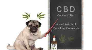 cbd para mascotas, cbd para perros para que sirve, cbd para gatos, cbd para perros, cbd para los animales, aceite cbd, aceite de cannabi beneficios