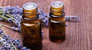 aceite de lavanda, beneficios del aceite de lavanda, aceite de lavanda para perros, como aplicar aceites esenciales en perros, lavanda para evitar pulgas, uso de aceites esenciales en mascotas