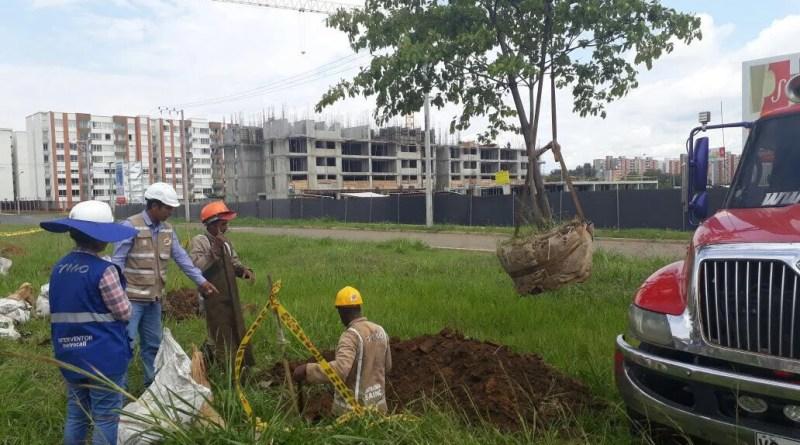 Metrocali termina la primera etapa de aprovechamiento y traslado de árboles en Valle del Lili.