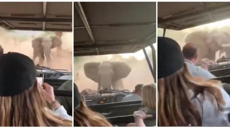 Elefante enfadado embiste carro de safari lleno de turistas