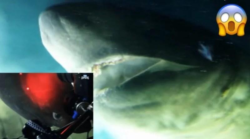 Graban tiburón prehistórico con más de 200 millones de antigüedad