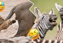 Los premios a las fotografías más divertidas de animales ya tiene finalistas
