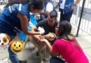 Aquí puedes inscribir a tu mascota en la gran jornada de esterilización