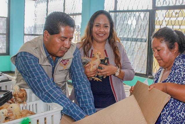 ENTREGA AYUNTAMIENTO DE CUAUTLANCINGO, 2 MIL AVES DE CORRAL EN BENEFICIO DE MÁS DE 200 FAMILIAS