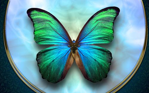 beautifulbutterfly wallpaper