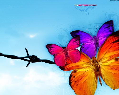 butterflies wallpaper design