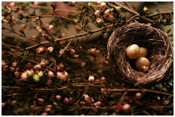 Spring Born