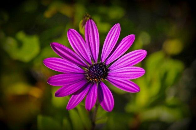 october flower