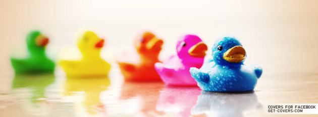 cute colorful ducks fb photo